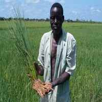 farmer(Ist)200